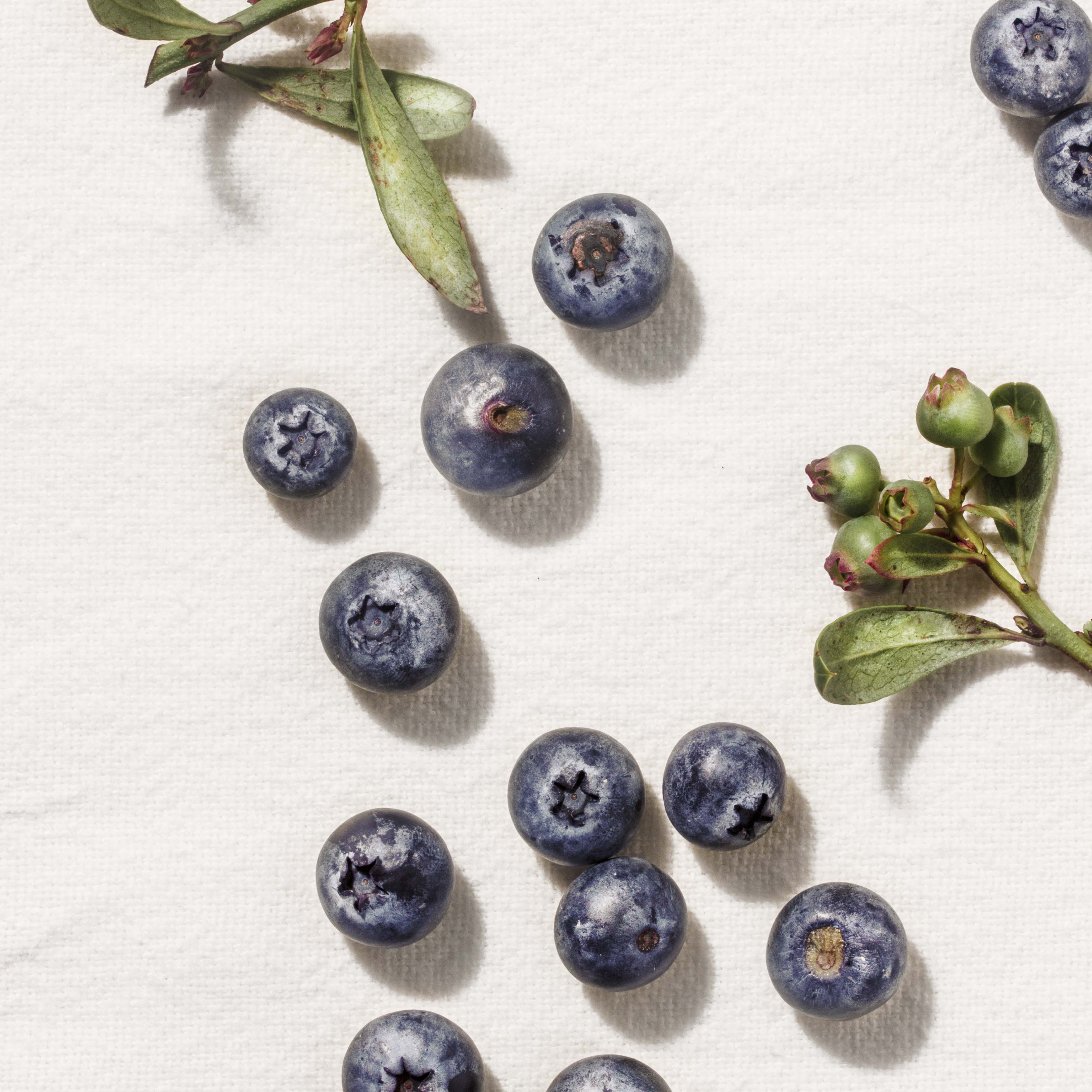 coyo_blueberries_7390_white